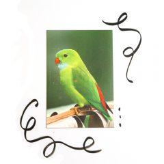 Magneet_poster_birdkopie