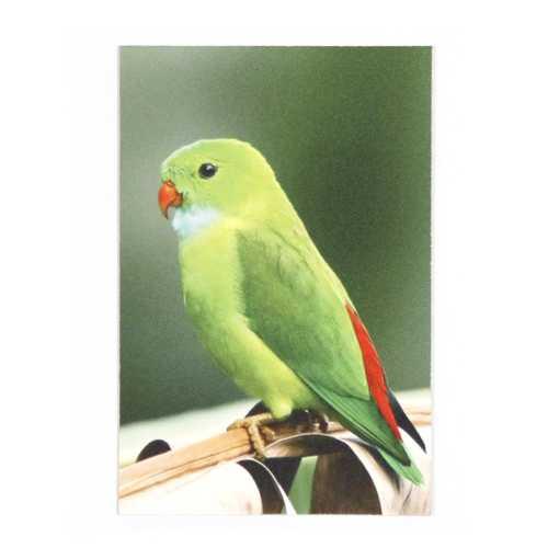 Magneetposter BIRD